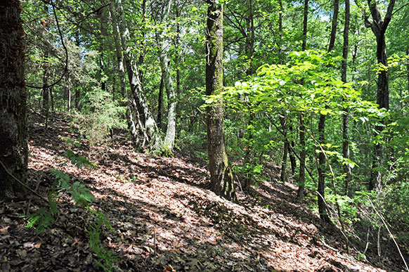 Hunting And Fishing Land For Sale In Texas